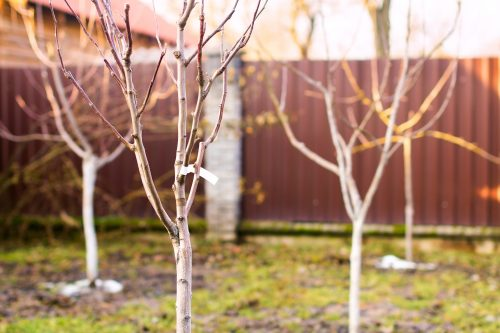 Making the most of your winter garden