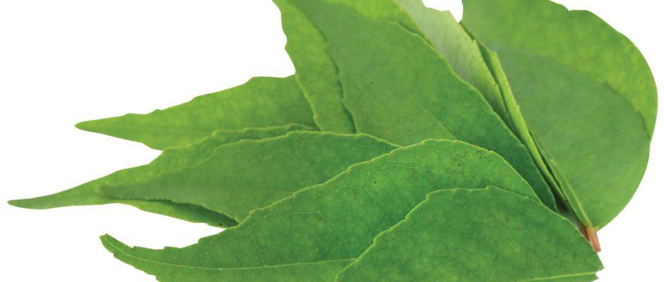 In season January: Curry leaf, watermelon, taro