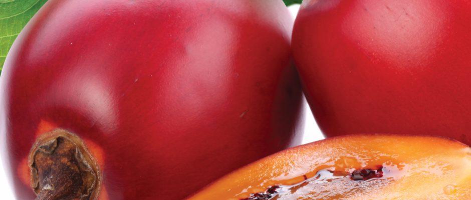 In season June: Bean sprouts, tamarillos, mustard greens