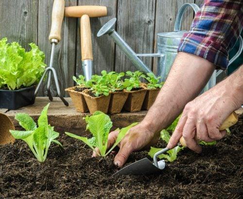 The lost plot: Winter planting