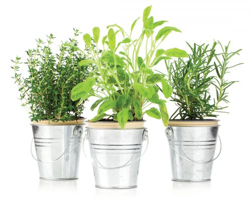 The lost plot: Grow your own herbs