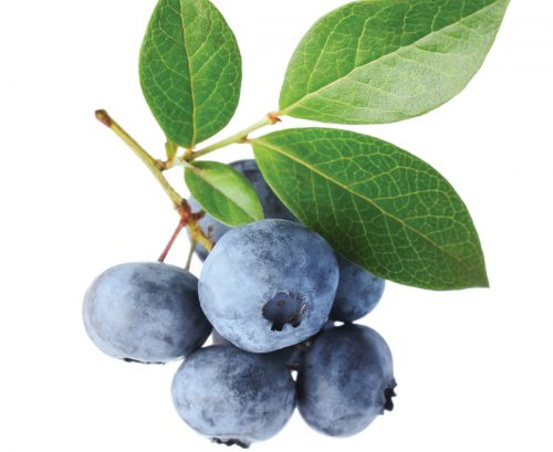 The lost plot: Blueberries