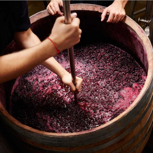 Red wine grapes in a barrel