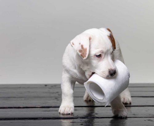 Coronavirus: Why people are stockpiling toilet paper