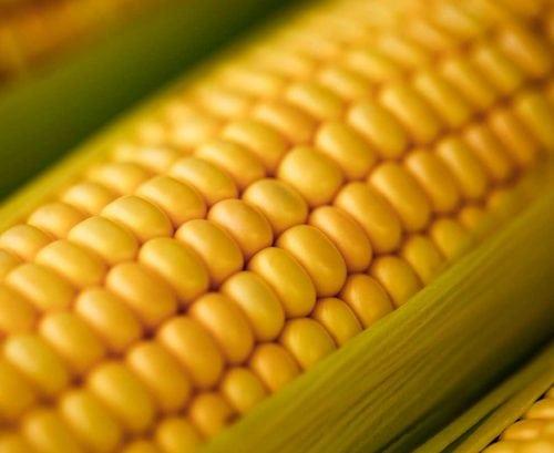 5 Surprising Health Benefits Of Corn Healthy Food Guide