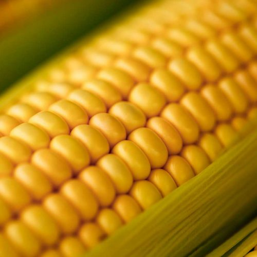 5 surprising health benefits of corn