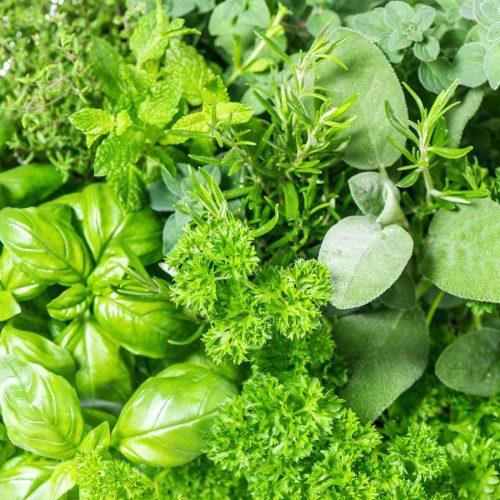 10 surprising foods that boost immunity