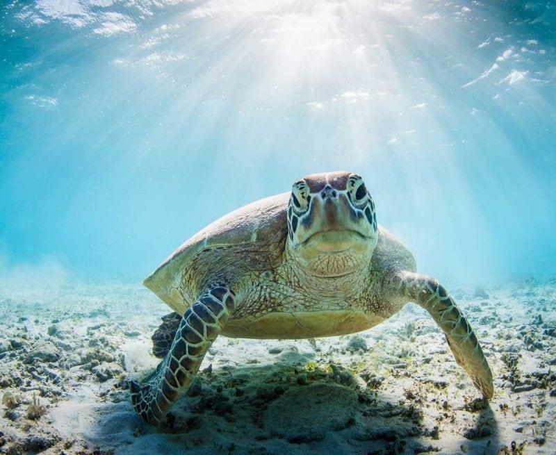 Sea turtle underwater