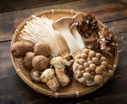 A variety of edible mushrooms