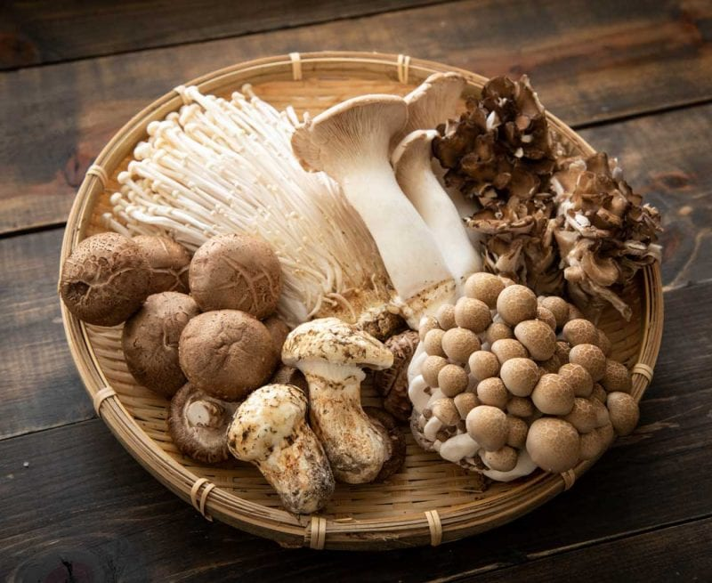 A variety of edible mushrooms