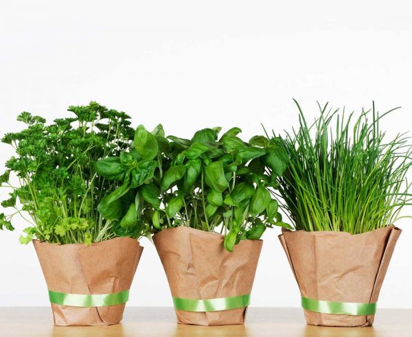 Healing herbs: Health benefits and uses