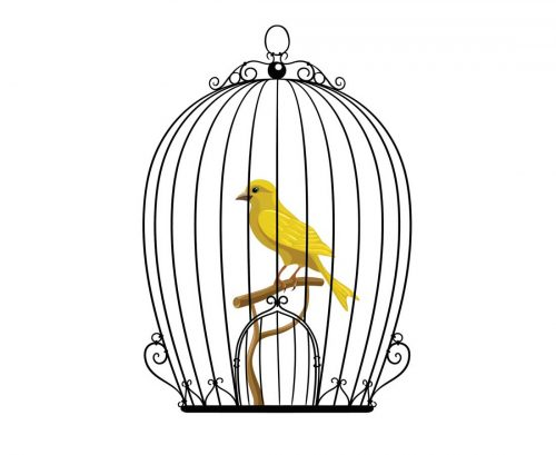 Bird trapped in a cage