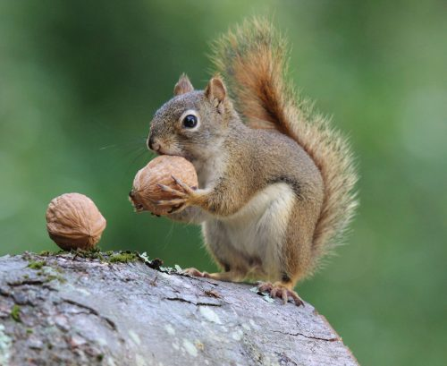 What's the healthy number of nuts to eat?