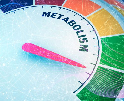 Why your metabolism may not be slowing with age