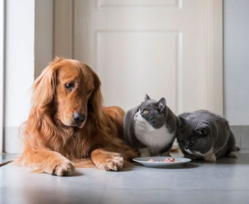 two cats eating while a dog looks on